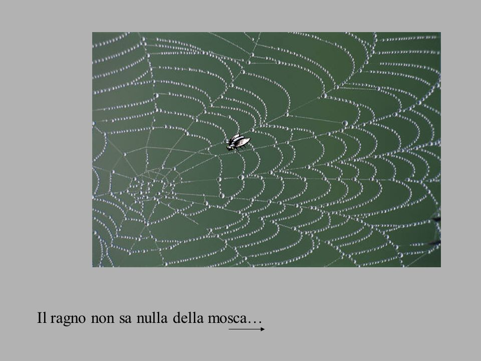 Il ragno non sa nulla della mosca…