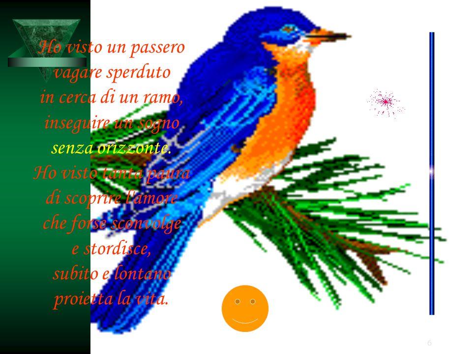 Ho visto un passero vagare sperduto. in cerca di un ramo, inseguire un sogno. senza orizzonte. Ho visto tanta paura.