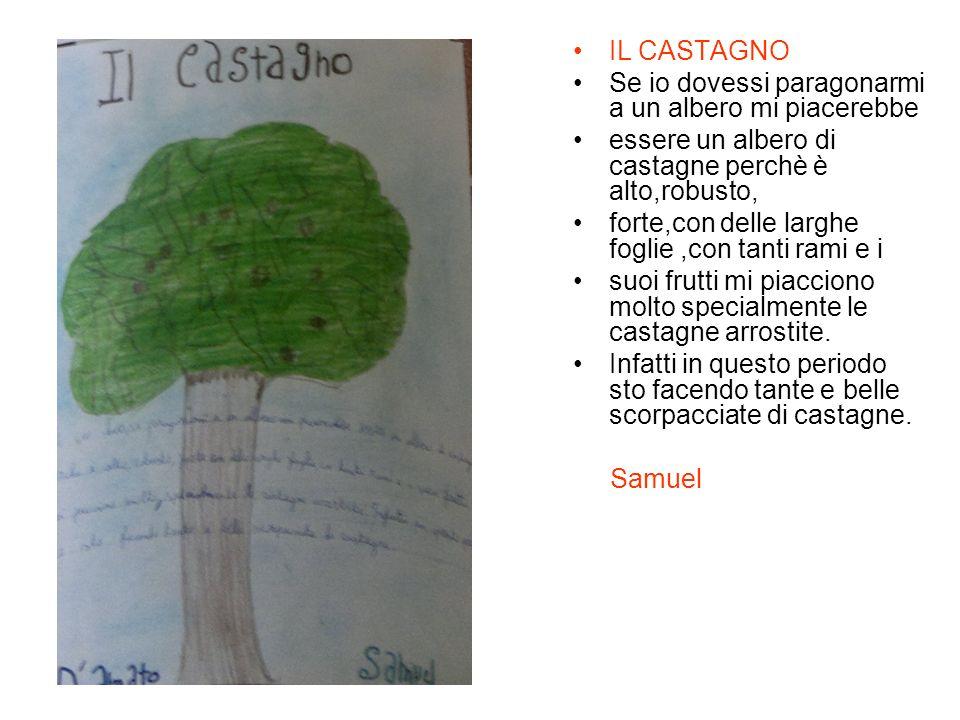IL CASTAGNO Se io dovessi paragonarmi a un albero mi piacerebbe. essere un albero di castagne perchè è alto,robusto,