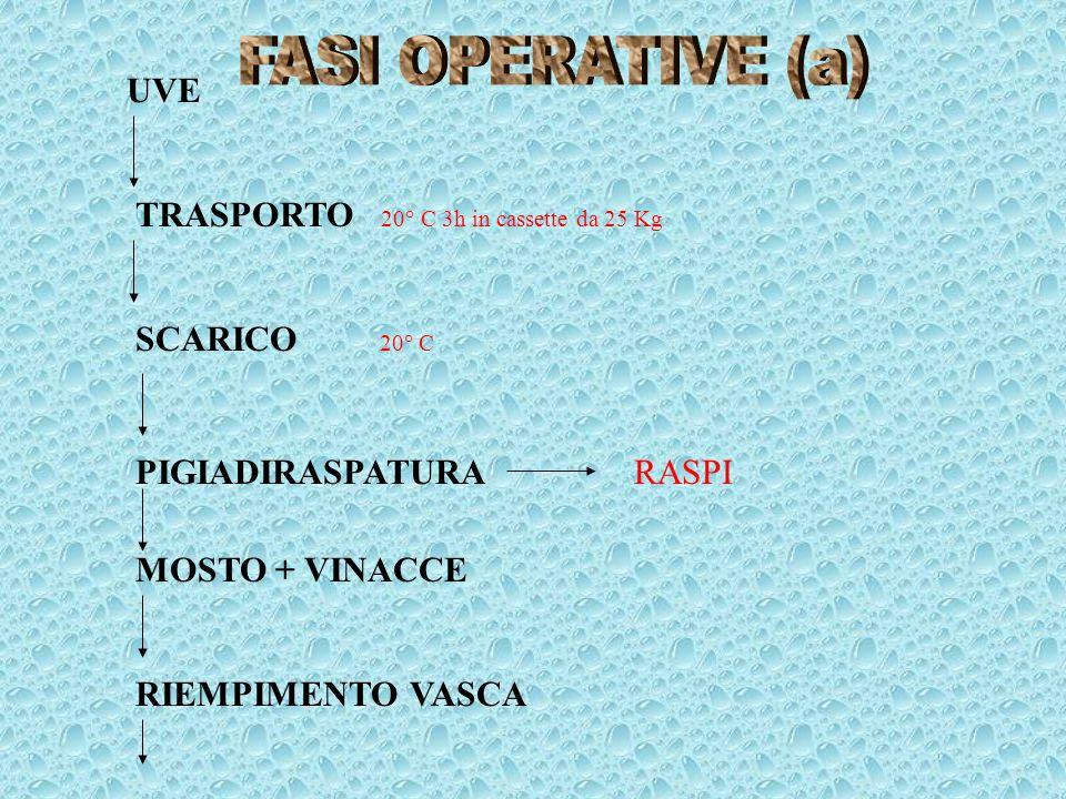 FASI OPERATIVE (a) UVE. TRASPORTO 20° C 3h in cassette da 25 Kg. SCARICO 20° C. PIGIADIRASPATURA RASPI.