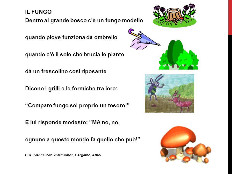 Dentro al grande bosco c'è un fungo modello