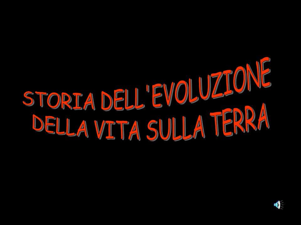 STORIA DELL EVOLUZIONE