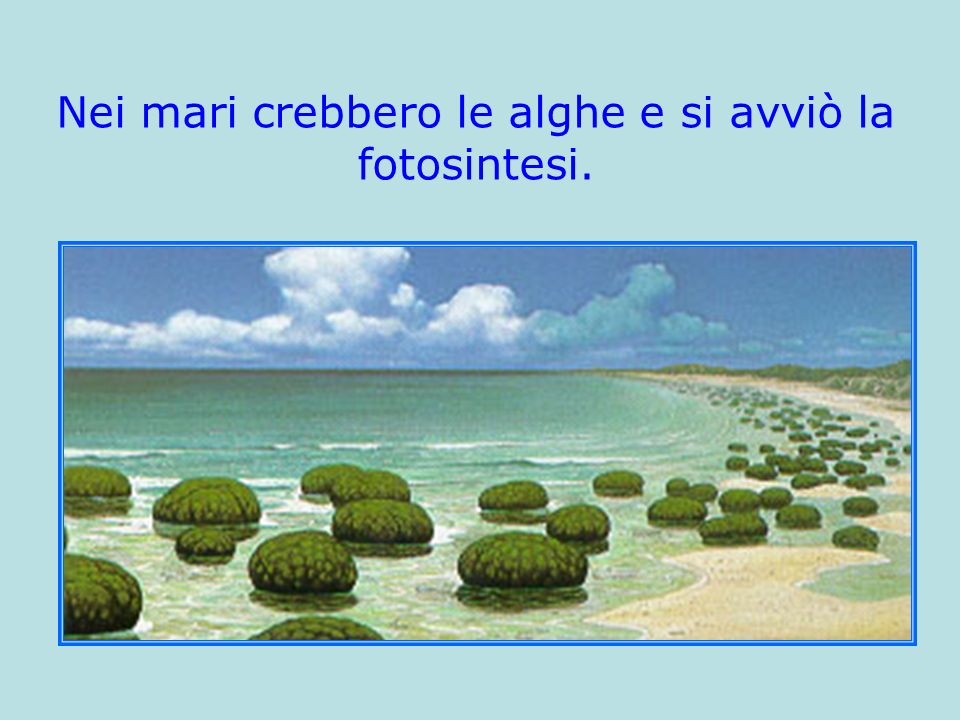 Nei mari crebbero le alghe e si avviò la fotosintesi.