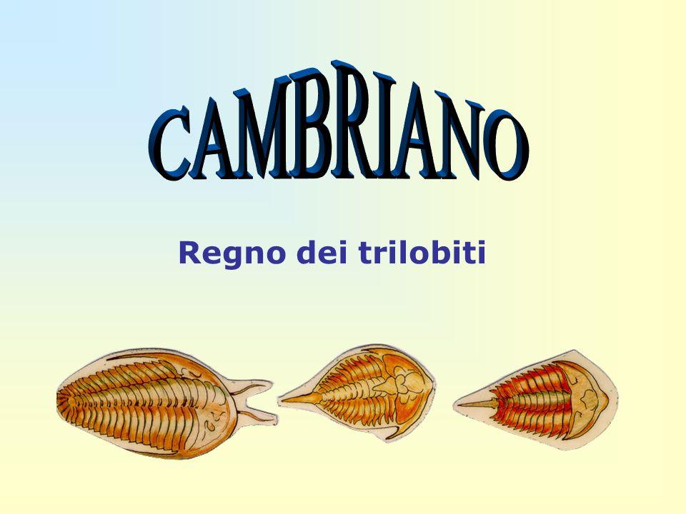 CAMBRIANO Regno dei trilobiti