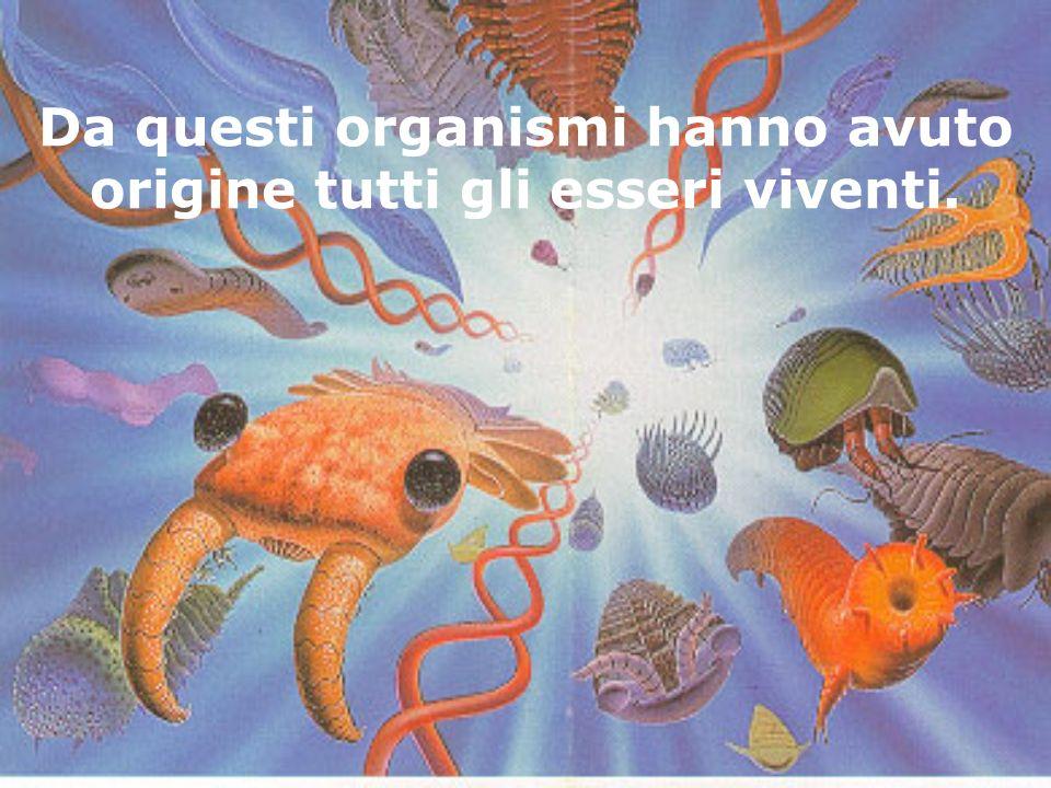 Da questi organismi hanno avuto origine tutti gli esseri viventi.