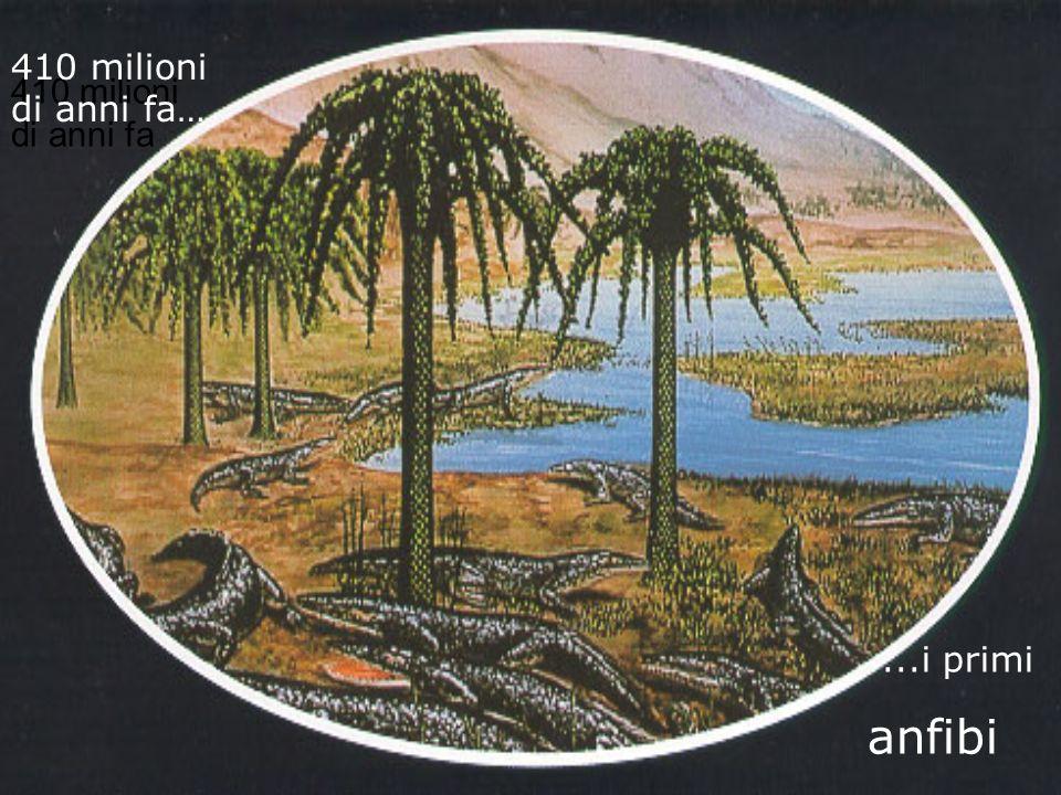 410 milioni di anni fa… 410 milioni di anni fa ...i primi anfibi