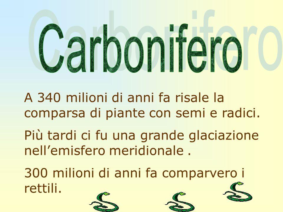 CarboniferoA 340 milioni di anni fa risale la comparsa di piante con semi e radici.