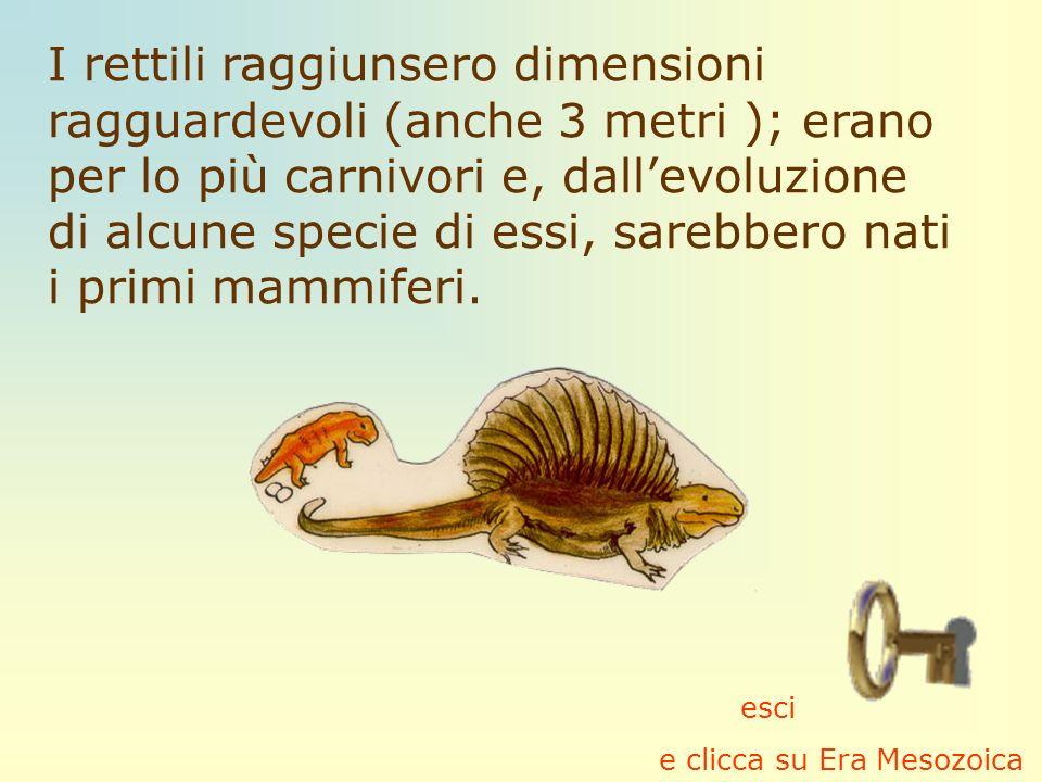 I rettili raggiunsero dimensioni ragguardevoli (anche 3 metri ); erano per lo più carnivori e, dall'evoluzione di alcune specie di essi, sarebbero nati i primi mammiferi.