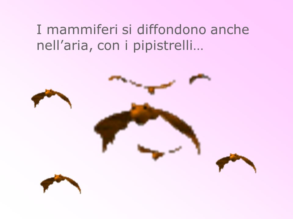 I mammiferi si diffondono anche nell'aria, con i pipistrelli…