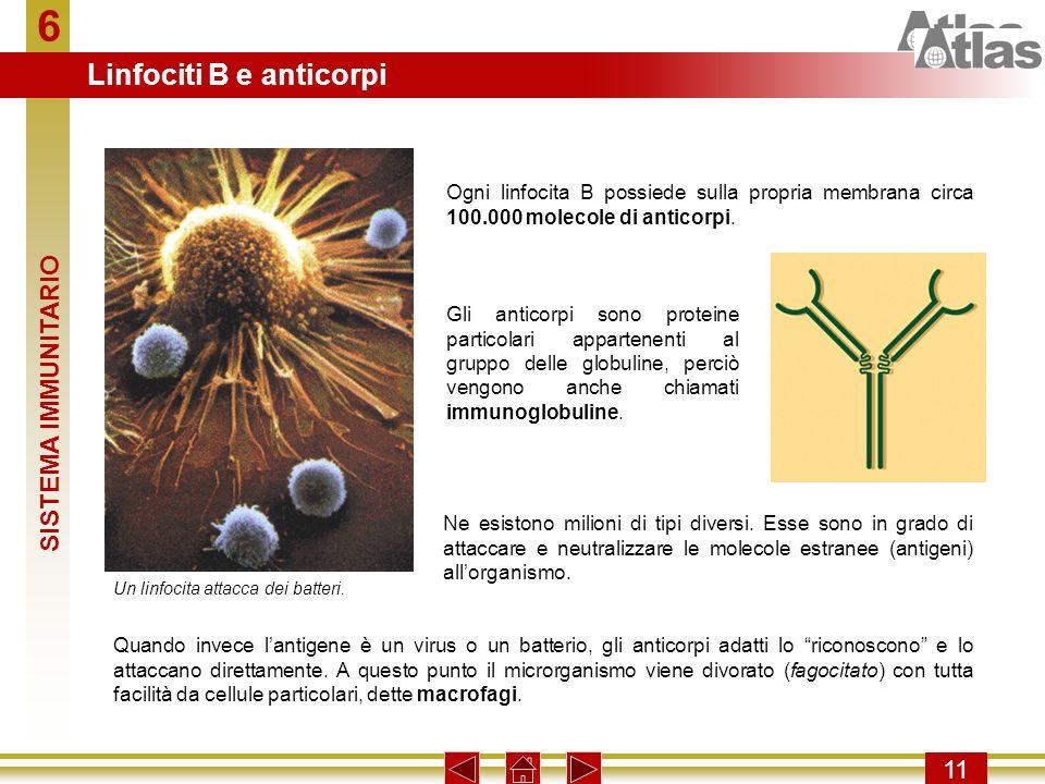 6 Linfociti B e anticorpi SISTEMA IMMUNITARIO 11