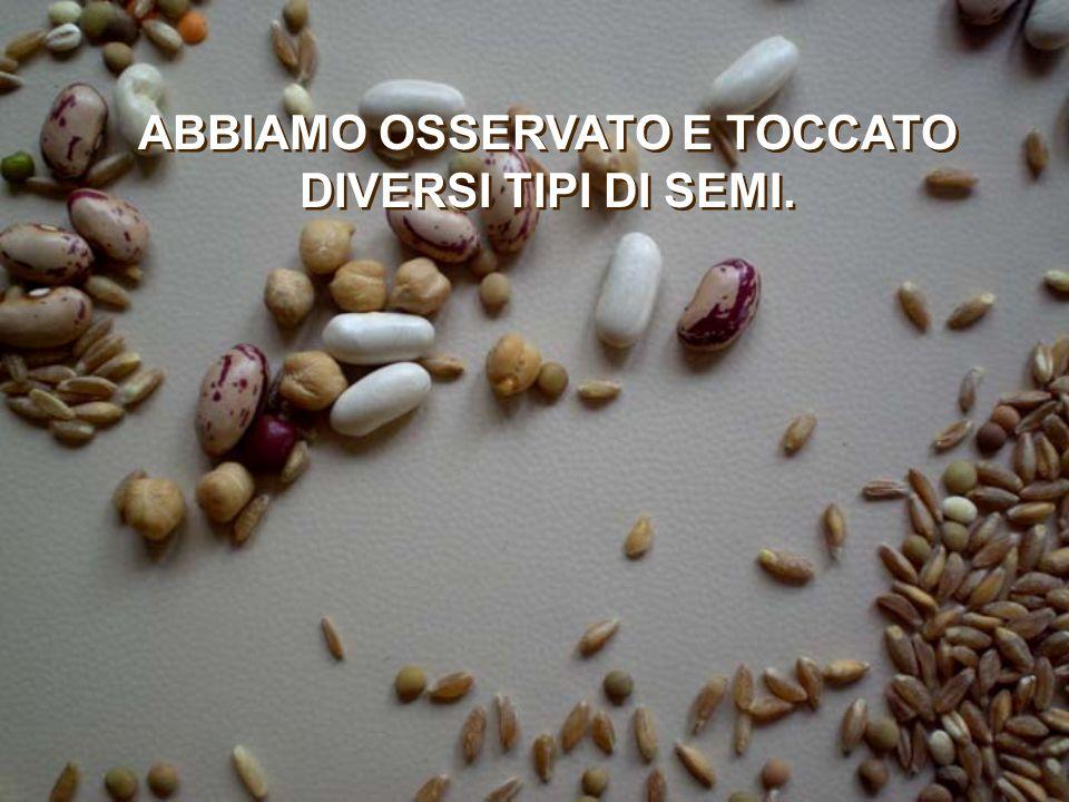 ABBIAMO OSSERVATO E TOCCATO DIVERSI TIPI DI SEMI.
