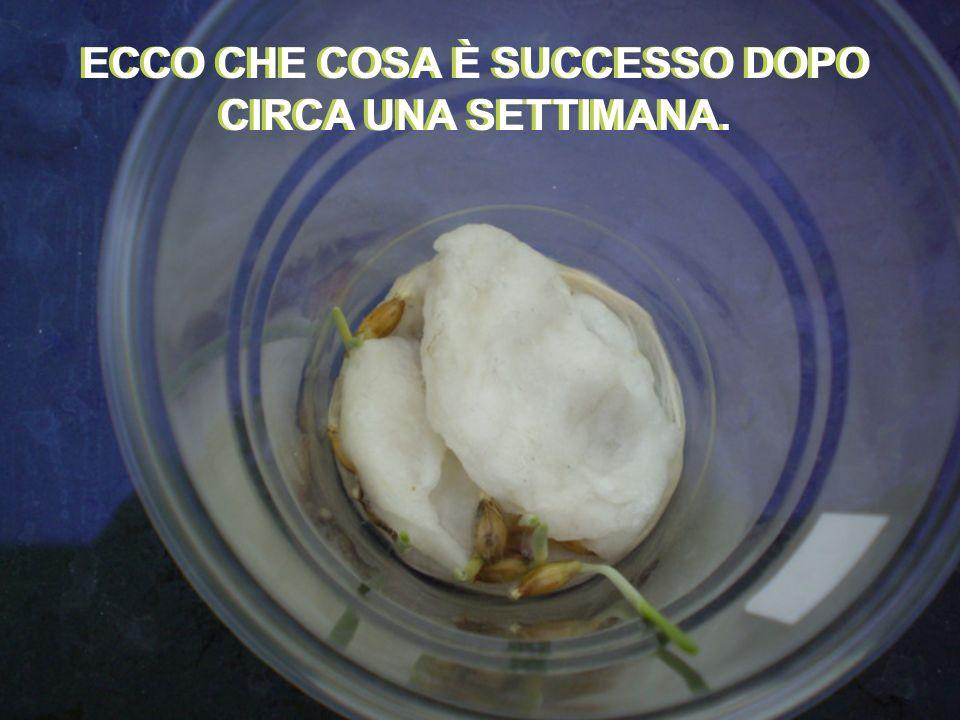 ECCO CHE COSA È SUCCESSO DOPO CIRCA UNA SETTIMANA.