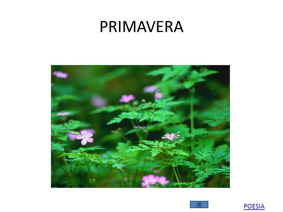 PRIMAVERA POESIA