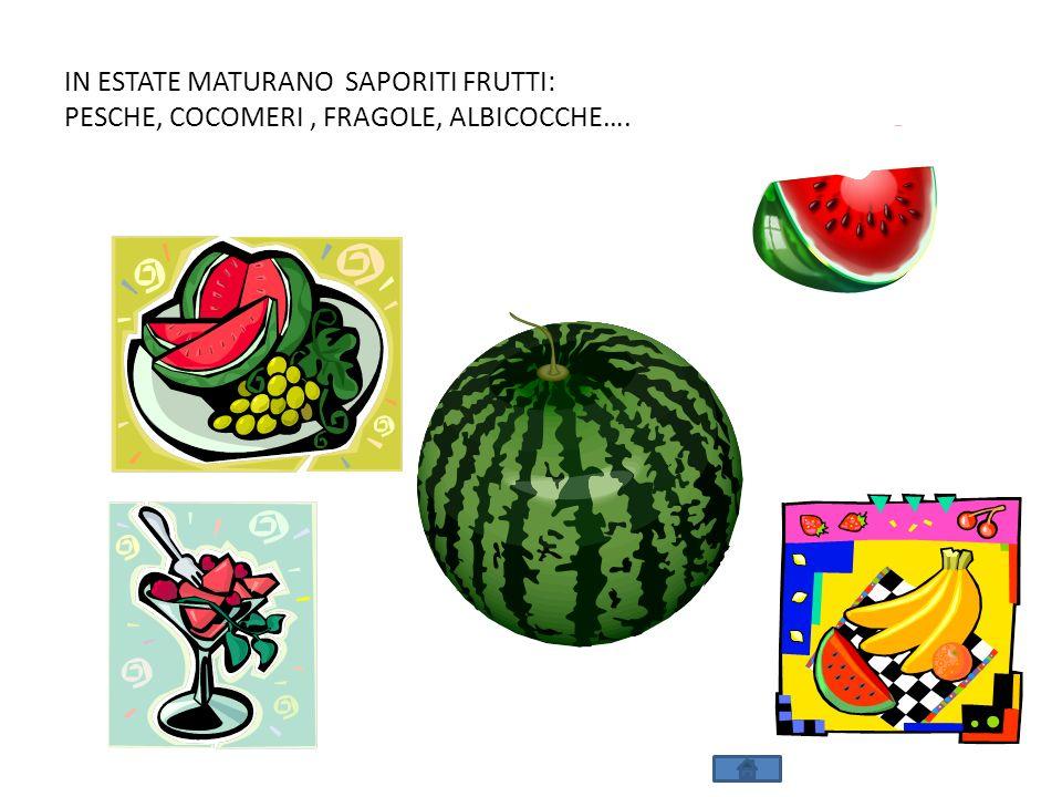 IN ESTATE MATURANO SAPORITI FRUTTI: PESCHE, COCOMERI , FRAGOLE, ALBICOCCHE….