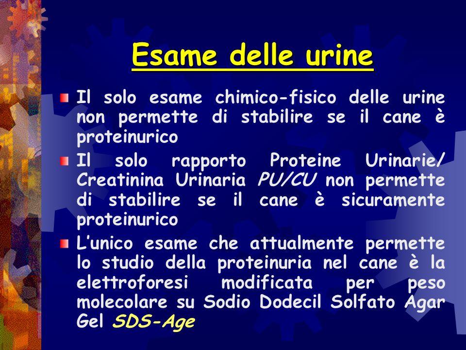 Esame delle urine Il solo esame chimico-fisico delle urine non permette di stabilire se il cane è proteinurico.