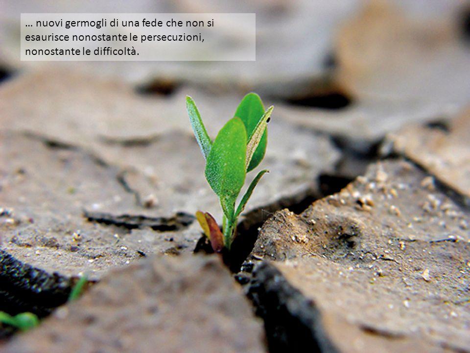 … nuovi germogli di una fede che non si esaurisce nonostante le persecuzioni, nonostante le difficoltà.