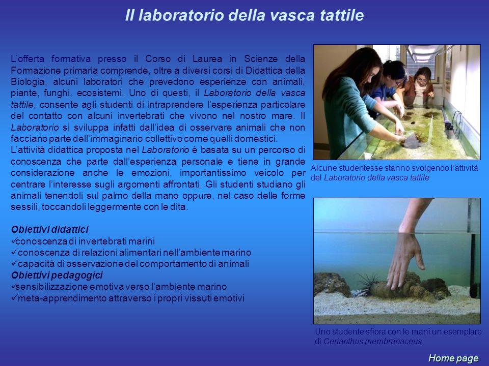 Il laboratorio della vasca tattile