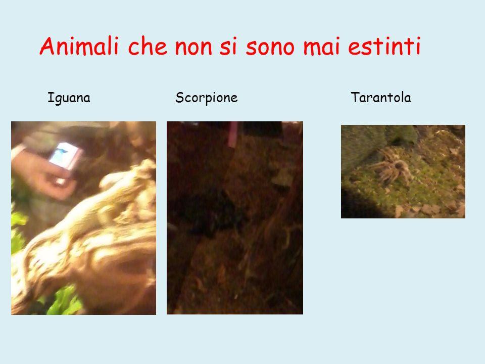 Animali che non si sono mai estinti Iguana Scorpione Tarantola