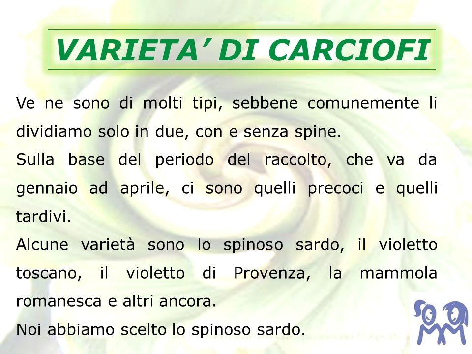 VARIETA' DI CARCIOFI Ve ne sono di molti tipi, sebbene comunemente li dividiamo solo in due, con e senza spine.