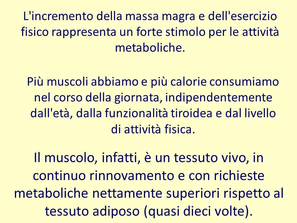 L incremento della massa magra e dell esercizio fisico rappresenta un forte stimolo per le attività metaboliche.