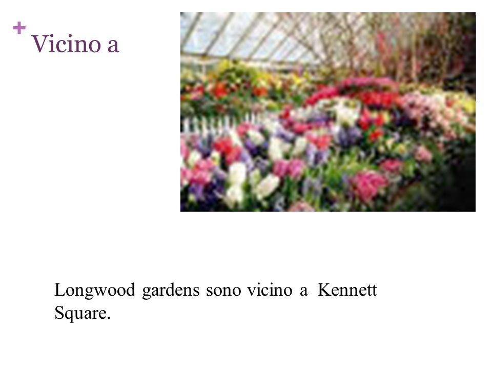 Vicino a Longwood gardens sono vicino a Kennett Square.