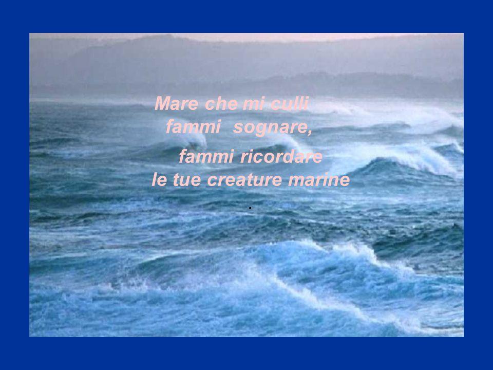 Mare che mi culli fammi sognare, fammi ricordare le tue creature marine .