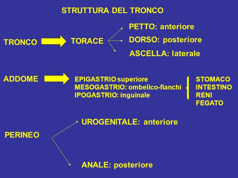UROGENITALE: anteriore