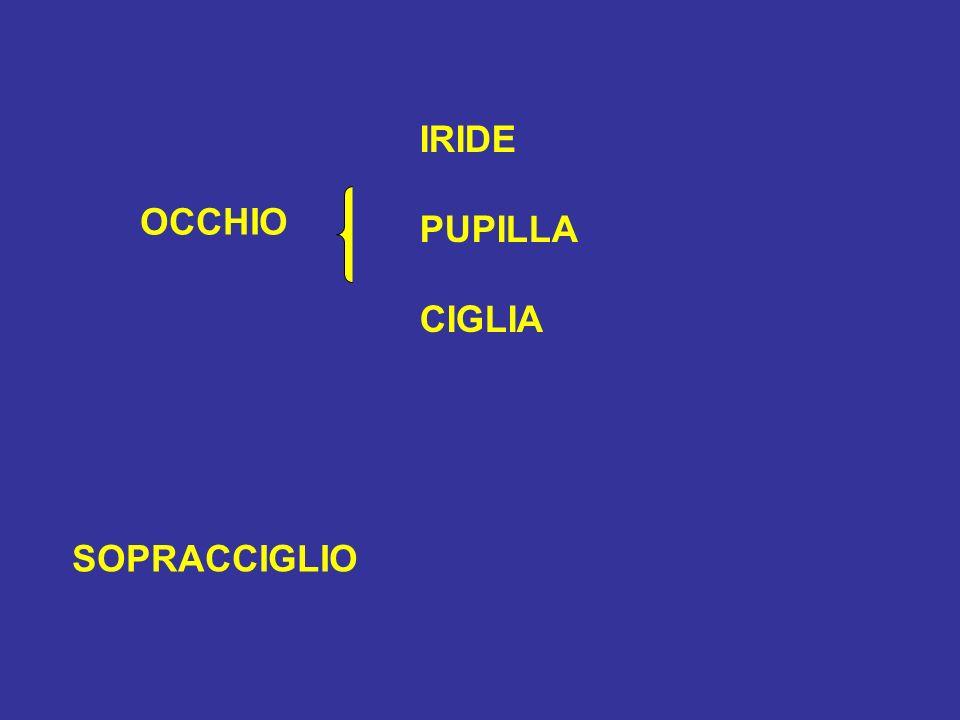 IRIDE PUPILLA CIGLIA OCCHIO SOPRACCIGLIO