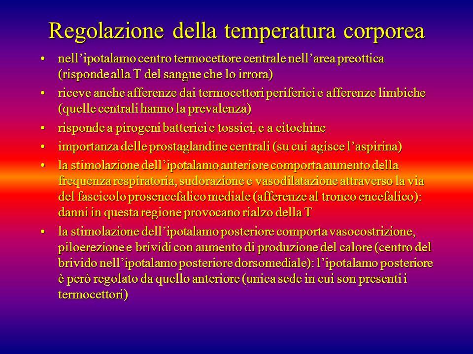 Regolazione della temperatura corporea