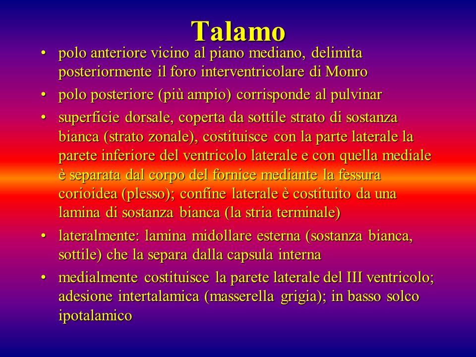 Talamopolo anteriore vicino al piano mediano, delimita posteriormente il foro interventricolare di Monro.