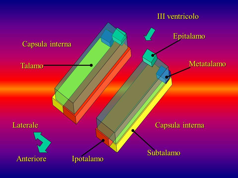 III ventricoloEpitalamo. Capsula interna. Metatalamo. Talamo. Laterale. Capsula interna. Subtalamo.