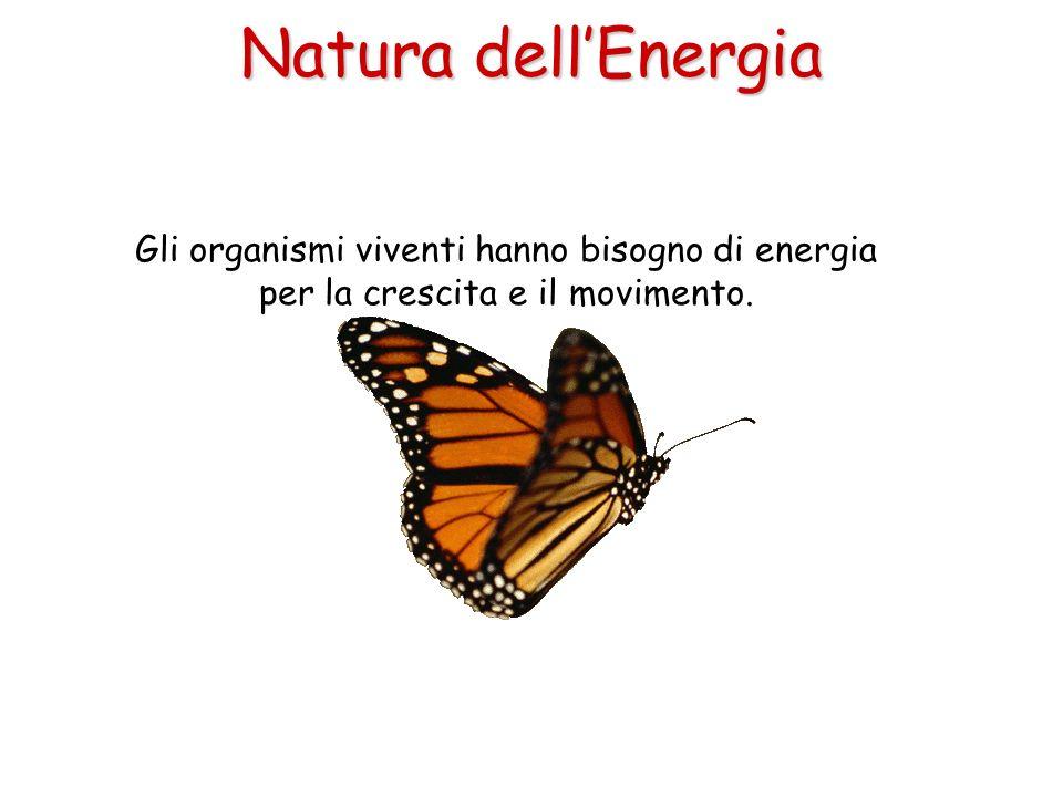 Natura dell'Energia Gli organismi viventi hanno bisogno di energia per la crescita e il movimento.