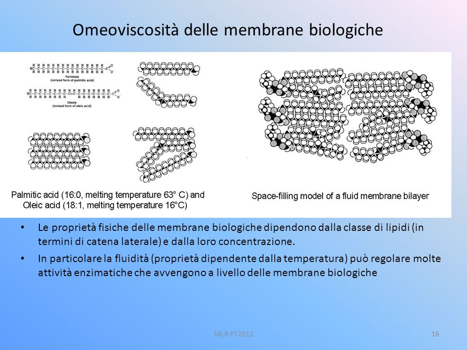 Omeoviscosità delle membrane biologiche
