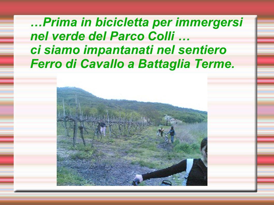 …Prima in bicicletta per immergersi nel verde del Parco Colli … ci siamo impantanati nel sentiero Ferro di Cavallo a Battaglia Terme.