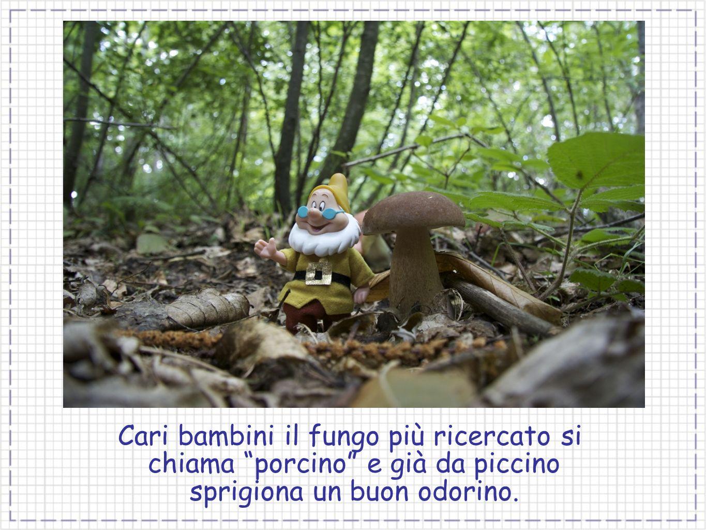 Cari bambini il fungo più ricercato si