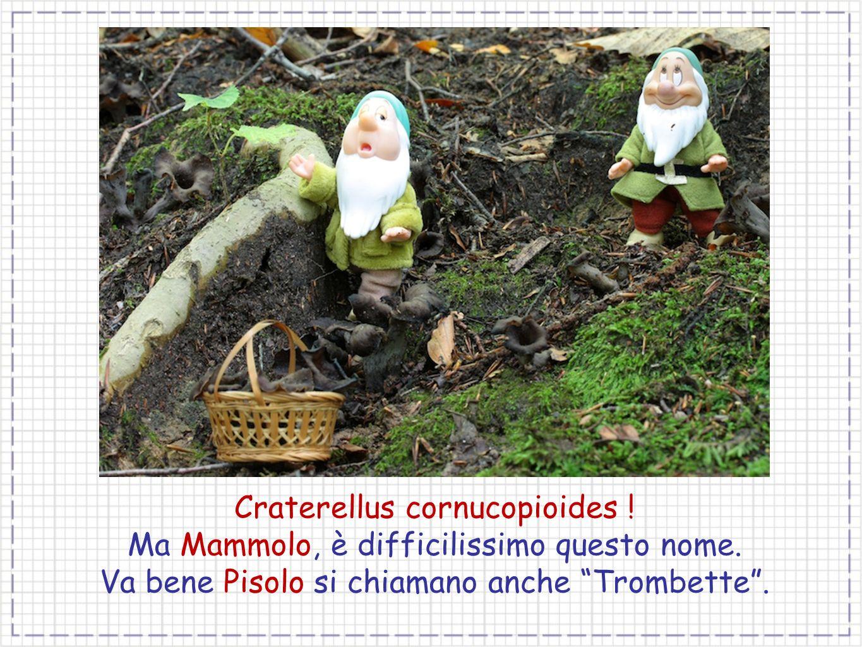 Craterellus cornucopioides ! Ma Mammolo, è difficilissimo questo nome.