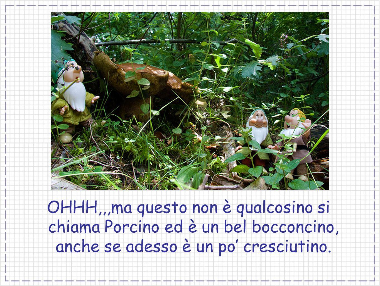 OHHH,,,ma questo non è qualcosino si chiama Porcino ed è un bel bocconcino, anche se adesso è un po' cresciutino.