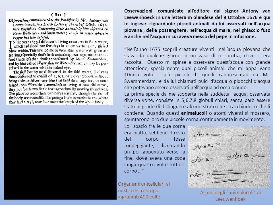 Alcuni degli animalucoli di Leeuwenhoek