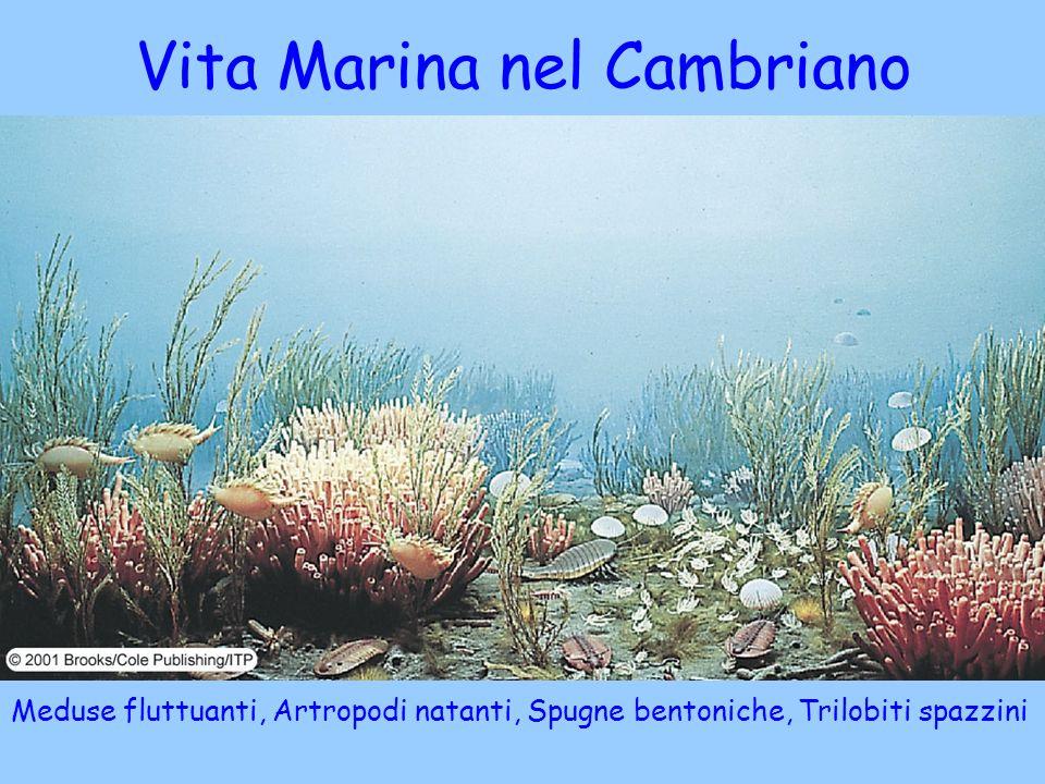 Vita Marina nel Cambriano
