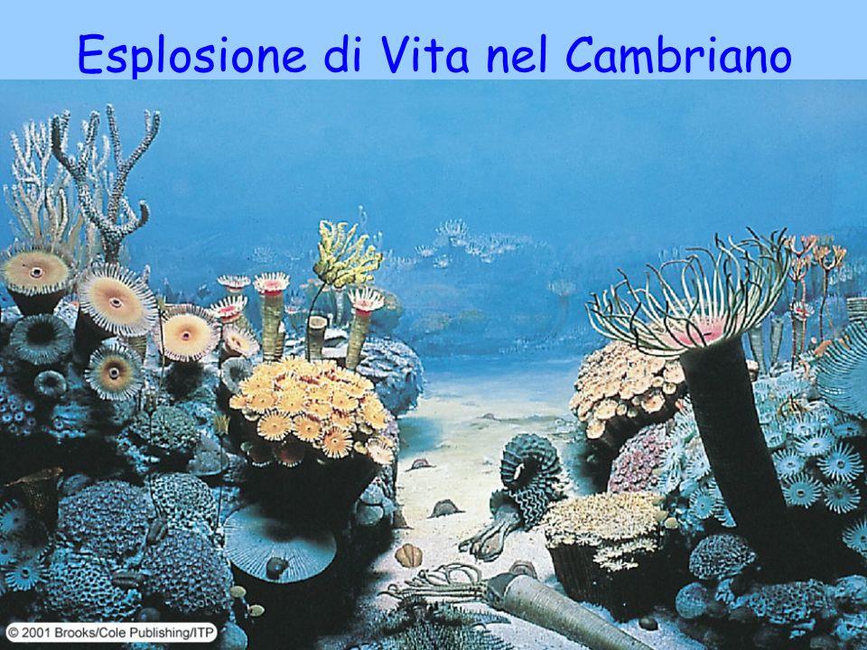 Esplosione di Vita nel Cambriano