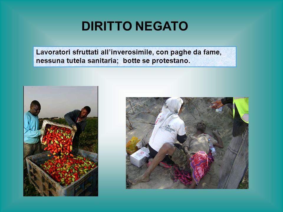 DIRITTO NEGATO Lavoratori sfruttati all'inverosimile, con paghe da fame, nessuna tutela sanitaria; botte se protestano.