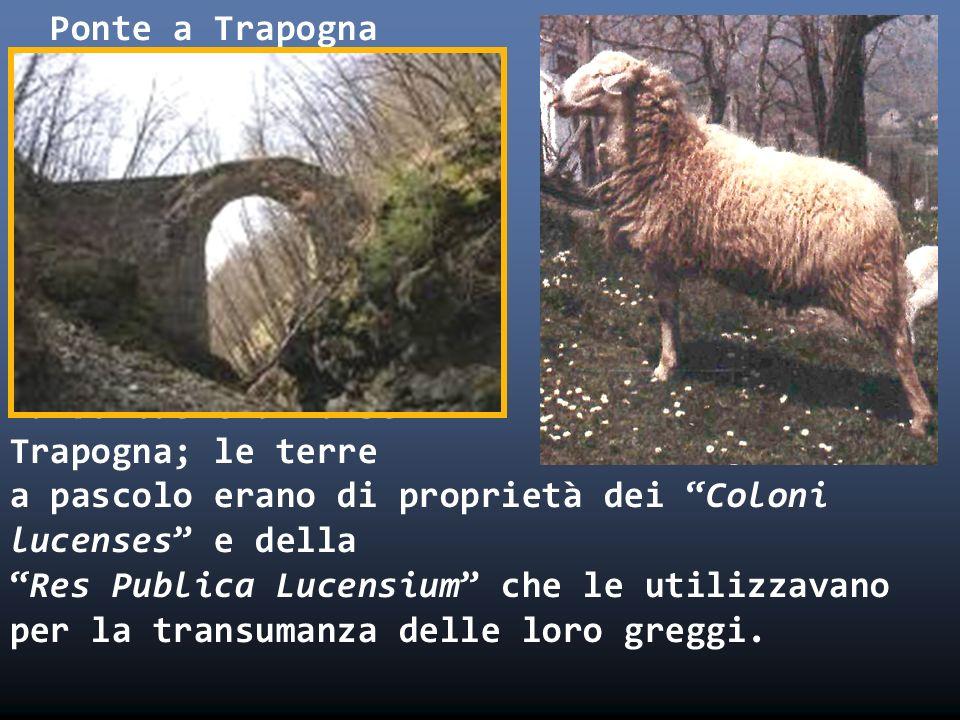 Ponte a Trapogna i a Tarboniae era forse Trapogna; le terre a pascolo erano di proprietà dei Coloni lucenses e della Res Publica Lucensium che le utilizzavano per la transumanza delle loro greggi.