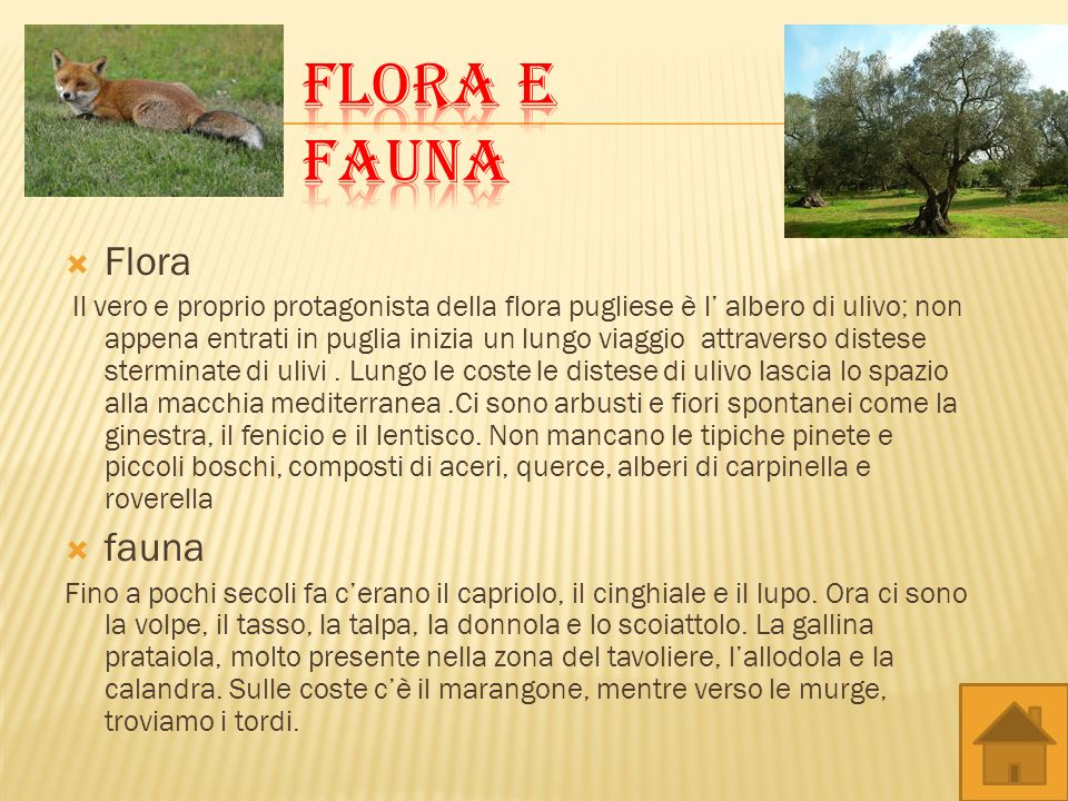 Flora e fauna Flora fauna