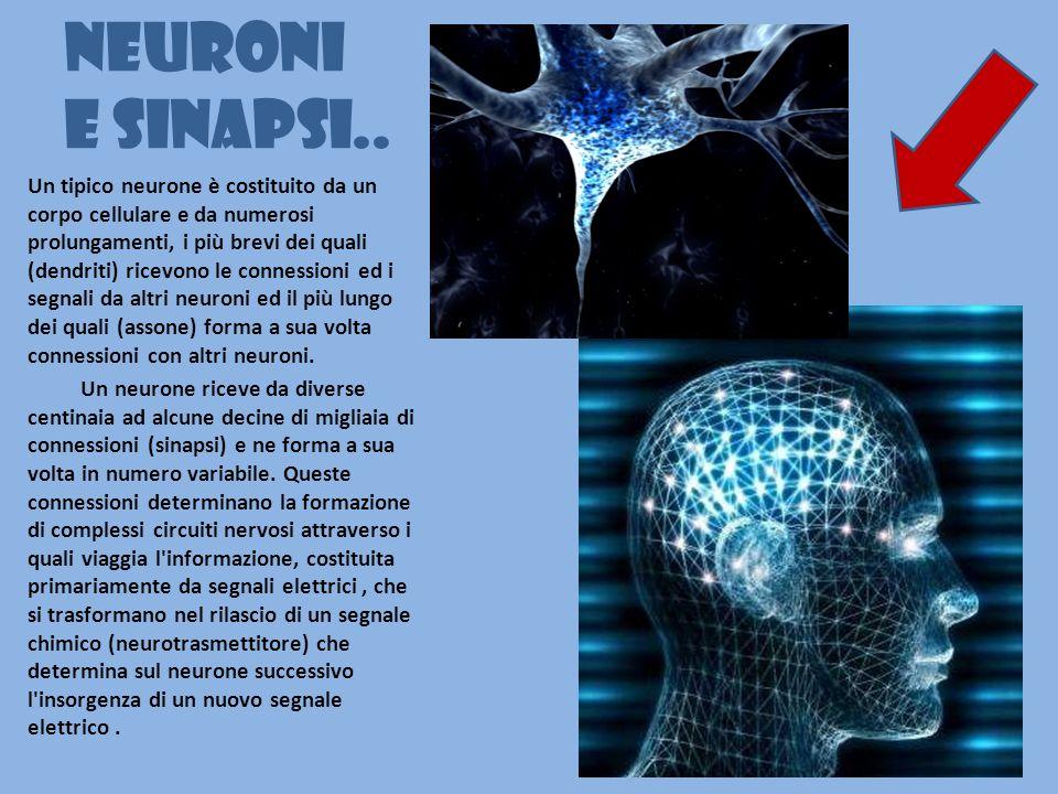 Neuroni e sinapsi..