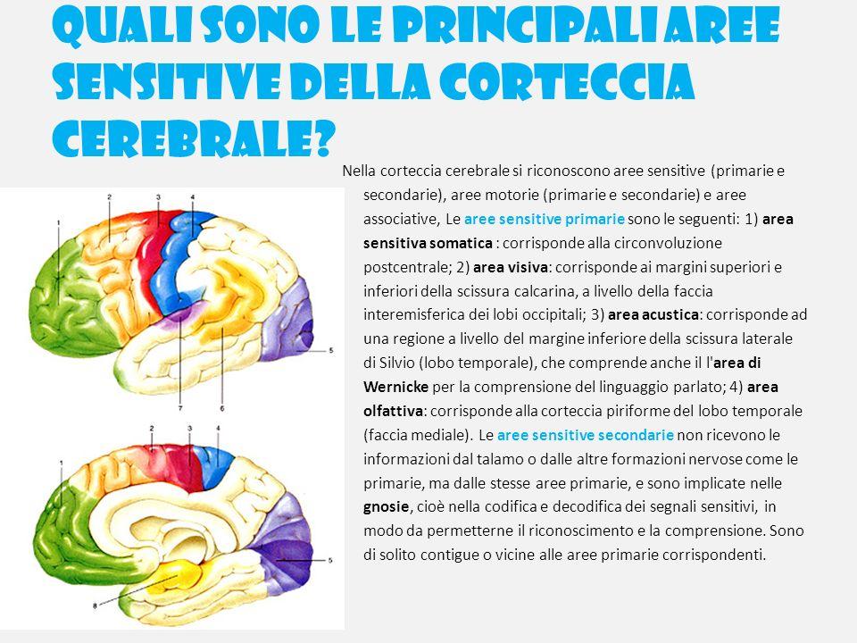 Quali sono le principali aree sensitive della corteccia cerebrale