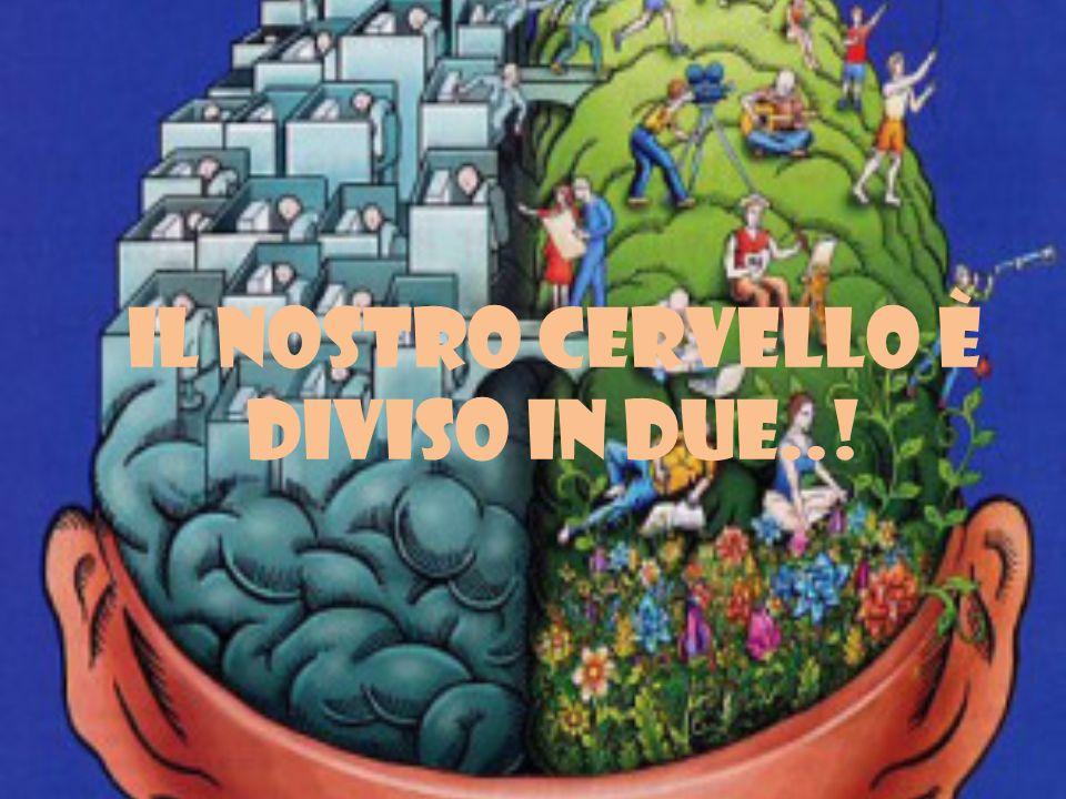 Il nostro cervello è diviso in due..!