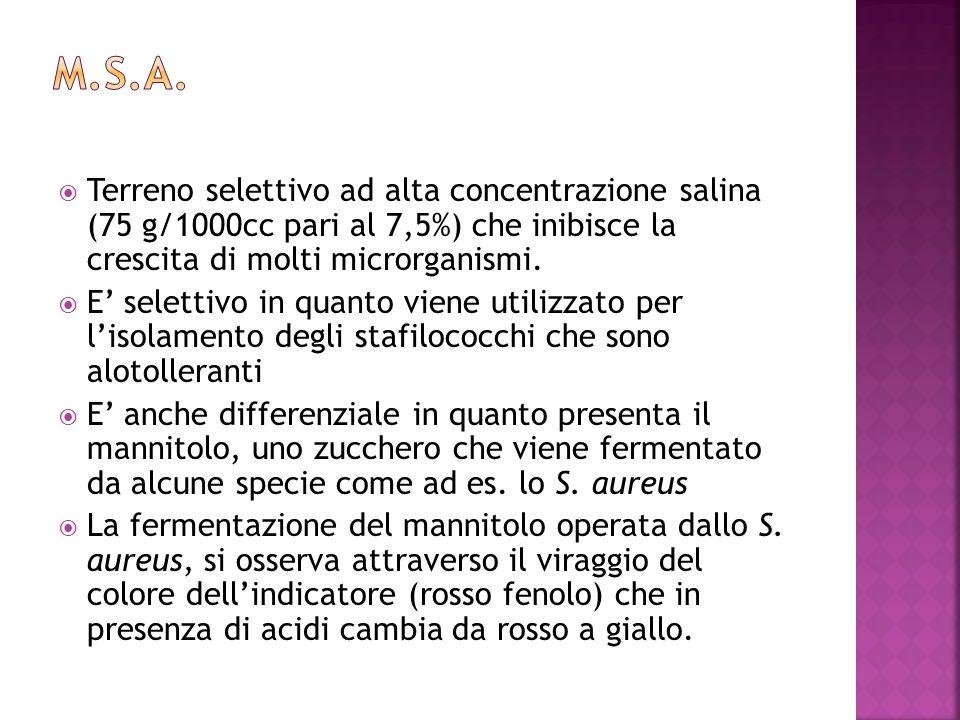 M.S.A. Terreno selettivo ad alta concentrazione salina (75 g/1000cc pari al 7,5%) che inibisce la crescita di molti microrganismi.
