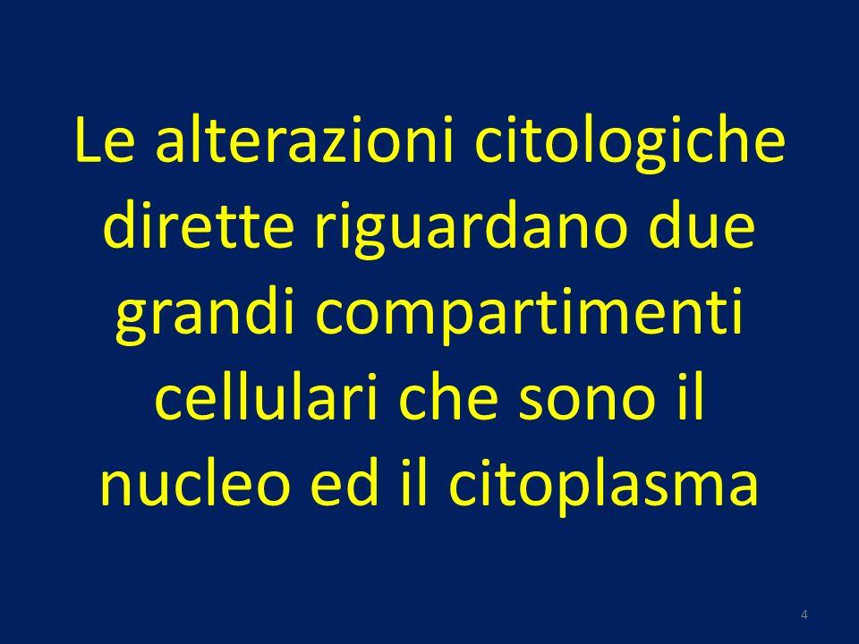 Le alterazioni citologiche dirette riguardano due grandi compartimenti cellulari che sono il nucleo ed il citoplasma