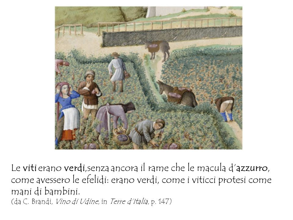 Le viti erano verdi,senza ancora il rame che le macula d'azzurro, come avessero le efelidi: erano verdi, come i viticci protesi come mani di bambini.