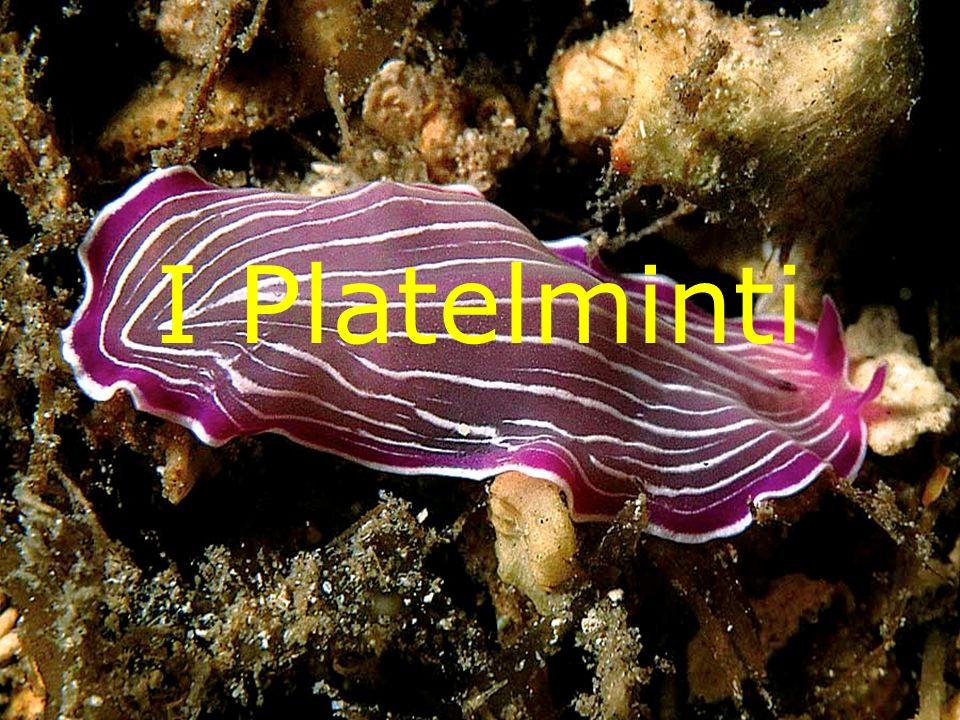 I Platelminti